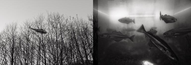 v) Sea-king. Leica M9, Summicron-M 35mm 2.0 ASPH h) Sei. Leica M9, Elmarit-M 24mm 2.8 ASPH