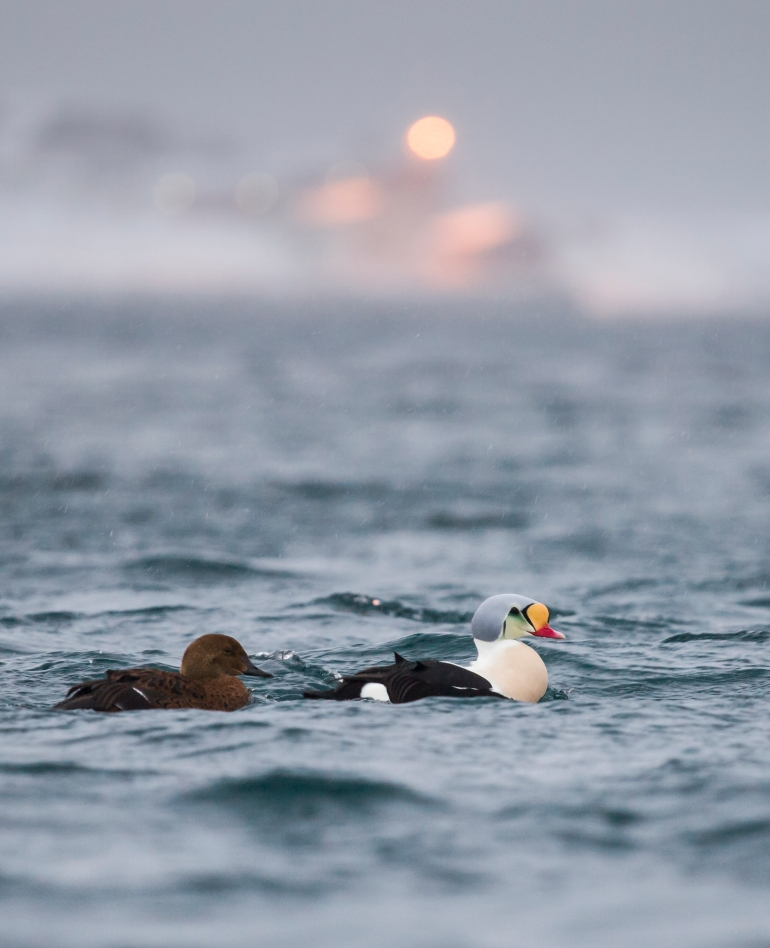 Foto Helge Eek