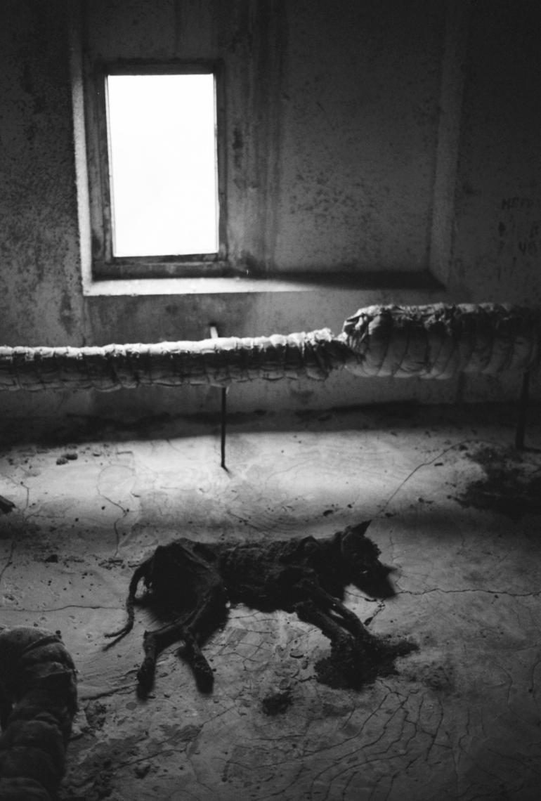 Død hund i loftetasjen i boligblokk.