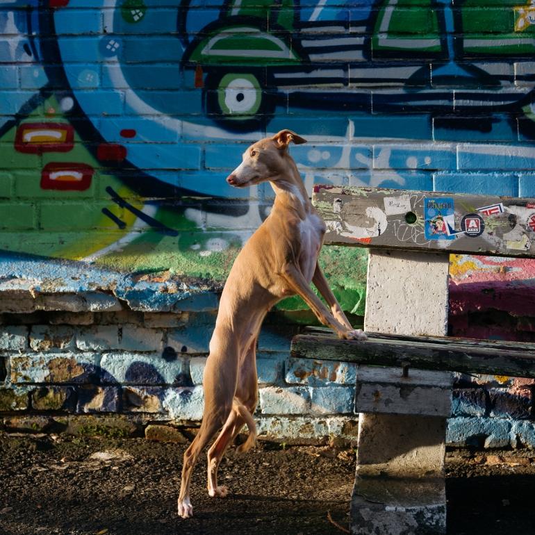 © Truls Bakken @dogsbestman